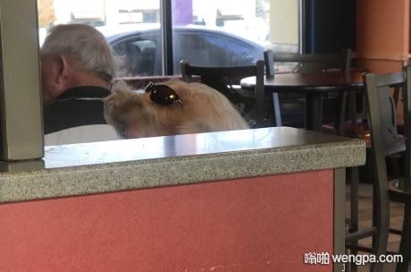 这是女人头上的墨镜 还是狗狗戴着墨镜