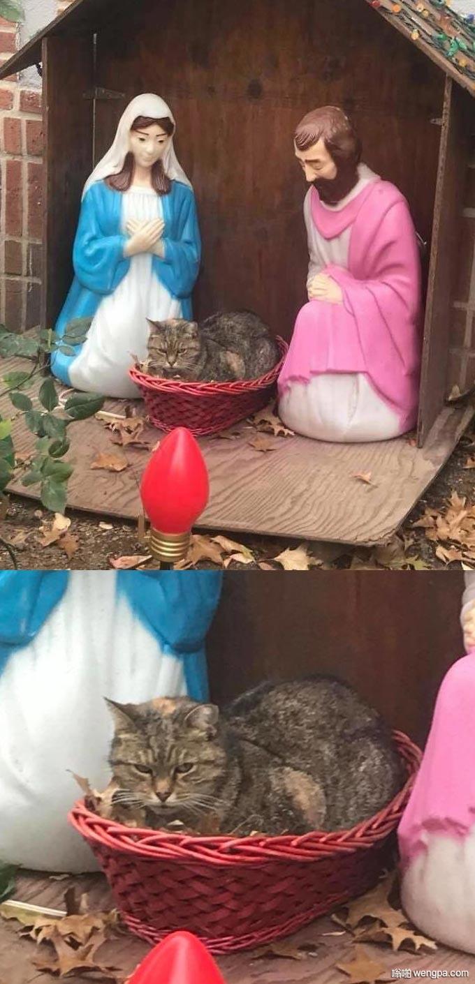 暴脾气猫无情占据耶稣诞生的摇篮 笑坏路人