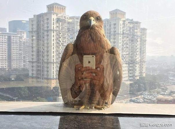窗户外面停了一只老鹰 哈哈 分不清谁拍谁