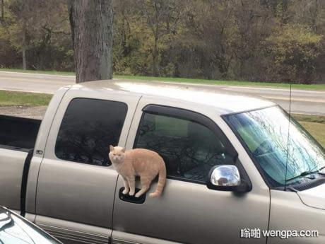 论猫咪的平衡力