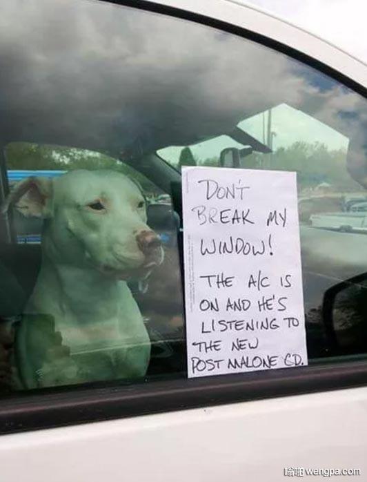 车主留了个纸条 意思好心路人不要敲碎车窗 狗狗在里边很享受呢 有空调吹又有好音乐听
