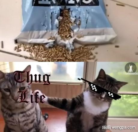 【小猫搞笑图片】白瞎我对你那么好,竟然出卖我...