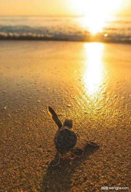 小乌龟迎接每一天的阳光