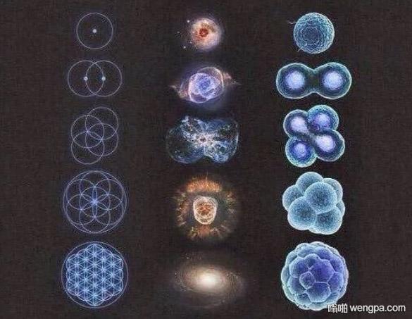 数学、天文学和生物学类似的模式