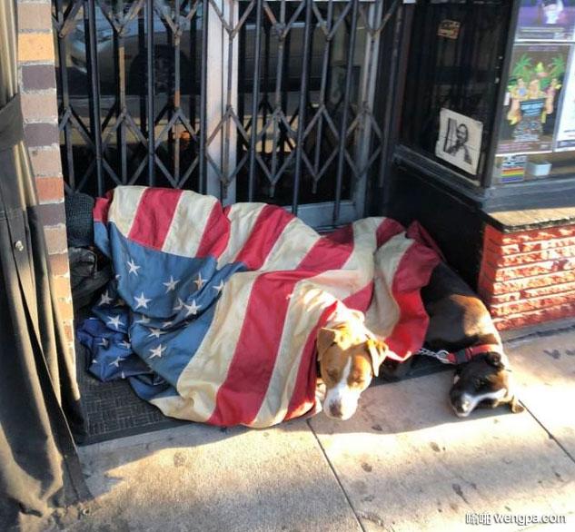 流浪狗的毯子让我震惊 美国国旗 毯子 - 嗡啪网