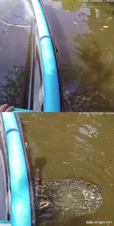 小船被卡住了 鳄鱼 搞笑图片 - 嗡啪网