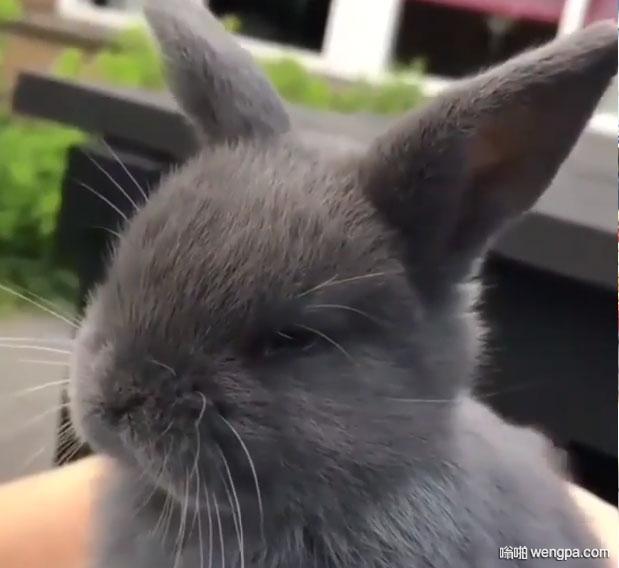 兔子被撸时的表情, 太销魂了