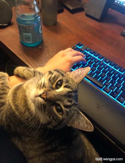我需要一个像这只猫一样看着我的女人