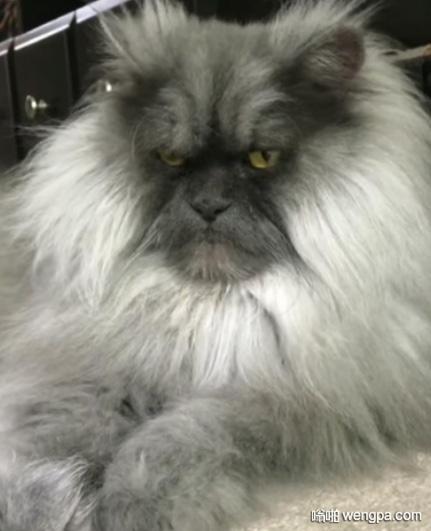 我见过最愤怒的猫 搞笑愤怒猫表情 - 嗡啪网