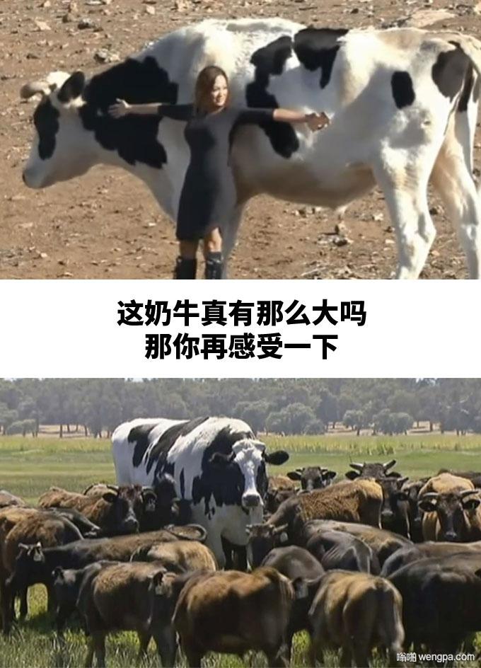 巨大的奶牛 看比例 够大吗