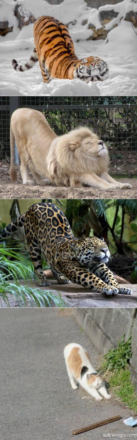 猫科动物的共性 翘屁嫩猫好可爱啊 