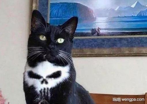 黑色小猫脖子上有一个白色骷髅图案 - 嗡啪网