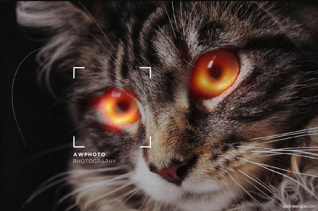 【爱因斯坦黑洞】爱因斯坦是不是喜欢养猫 - 嗡啪网