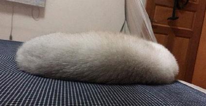 家里有一条猫虫