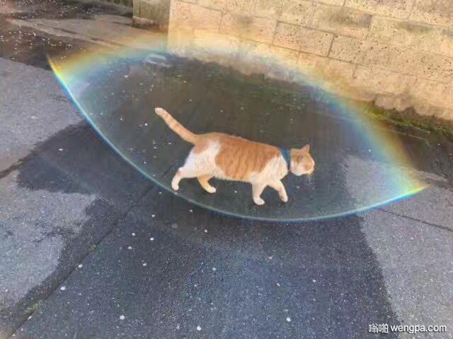 [小猫可爱萌宠图片]圣灵光照胖橘猫 - 嗡啪网