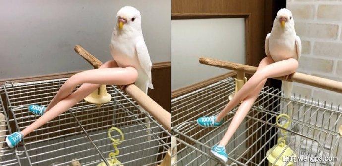 【搞笑图片】大长腿鹦鹉 没办法正视这只鹦鹉了 - 嗡啪网