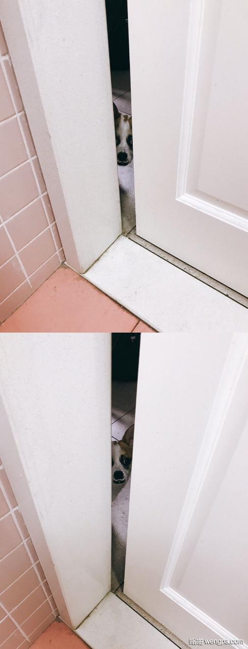 [狗狗搞笑图片]在洗澡 发现门缝外面有只偷窥狗 - 嗡啪网