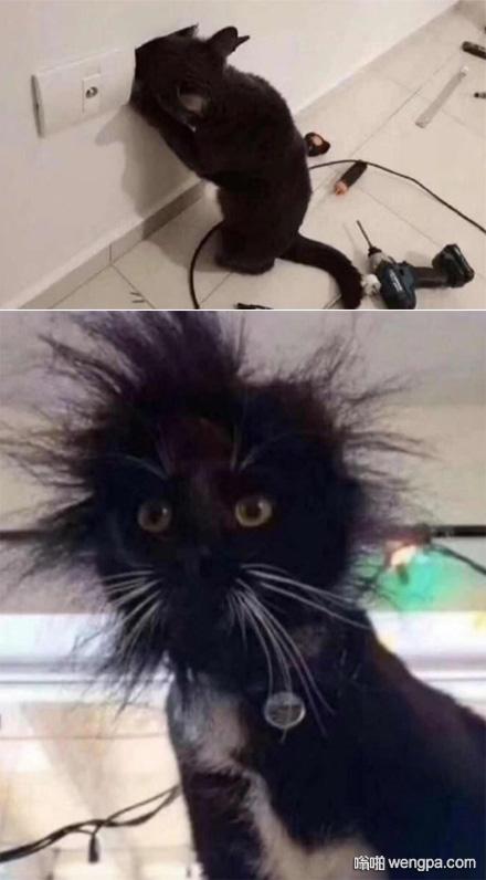 [猫被电击搞笑图片]小猫被电 猫都竖起来了