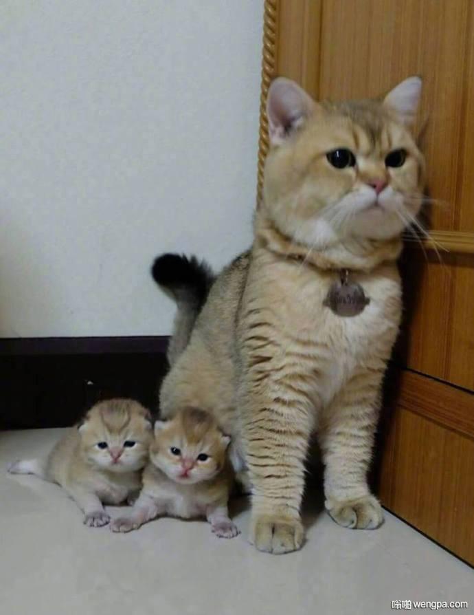 【萌宠可爱小猫亲子图片】长的这么像 一定是亲生的