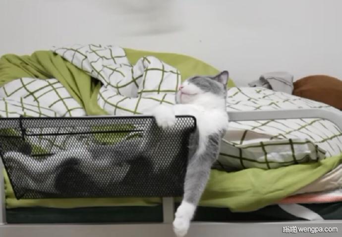 猫咪搞笑睡姿 猫咪的睡姿好妖娆 就问你手麻不麻