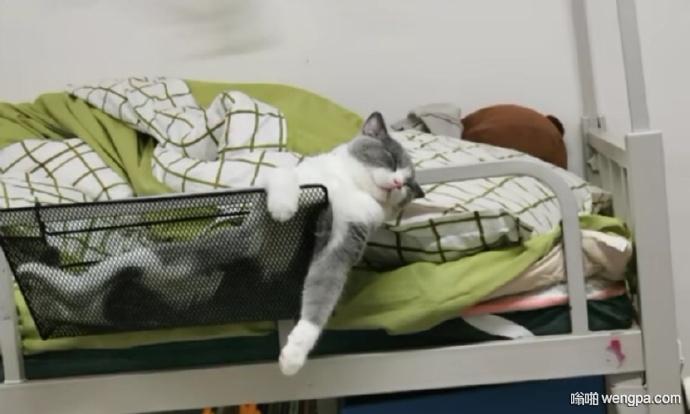 猫咪搞笑睡姿