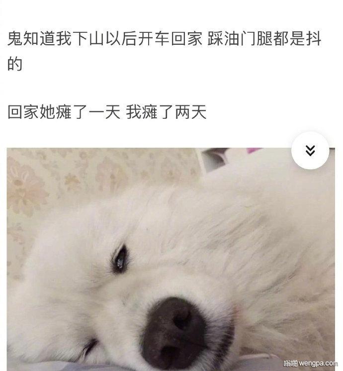 【遛狗搞笑图片】狗累了主人背下山 遛狗把狗遛累了是什么体验?