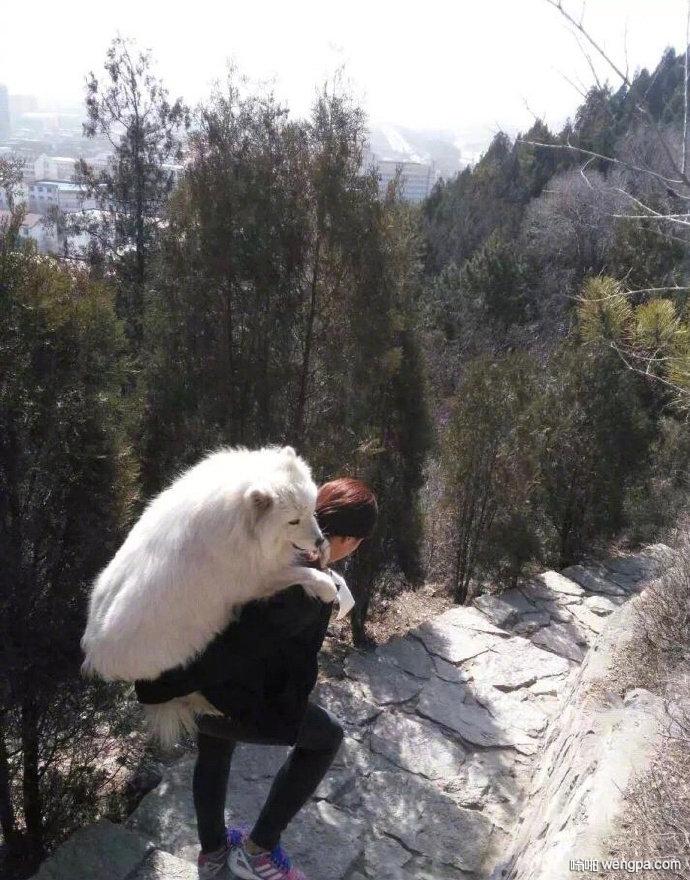 狗累了主人背下山 遛狗把狗遛累了是什么体验?