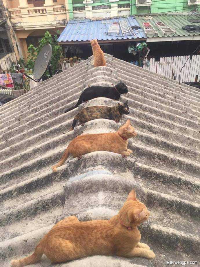 【萌宠小猫图片】每只猫都有一个座位 - 嗡啪网