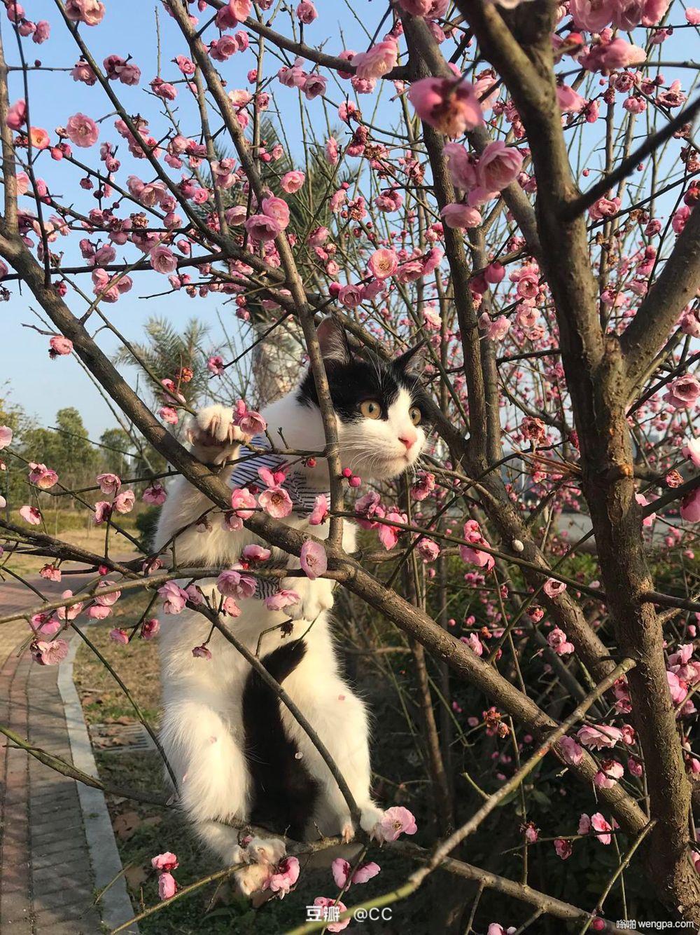 小猫与花可爱图片