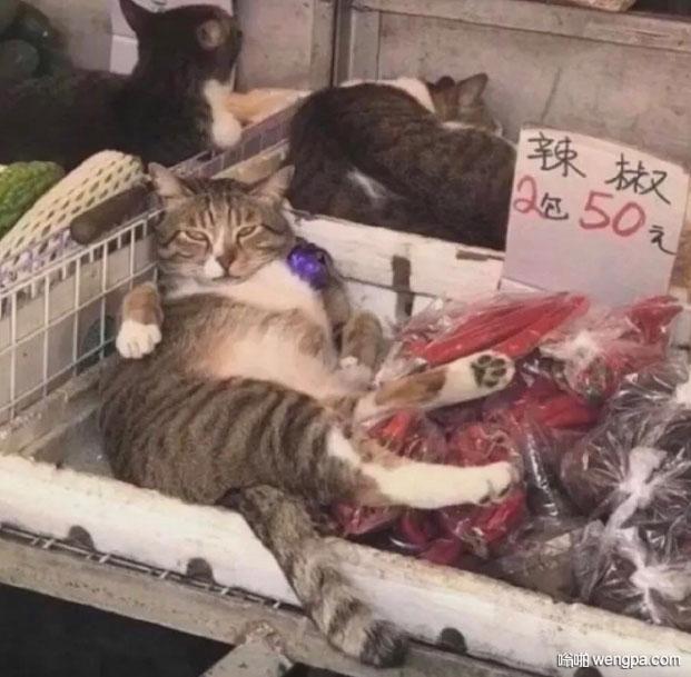 小猫诱惑搞笑图片