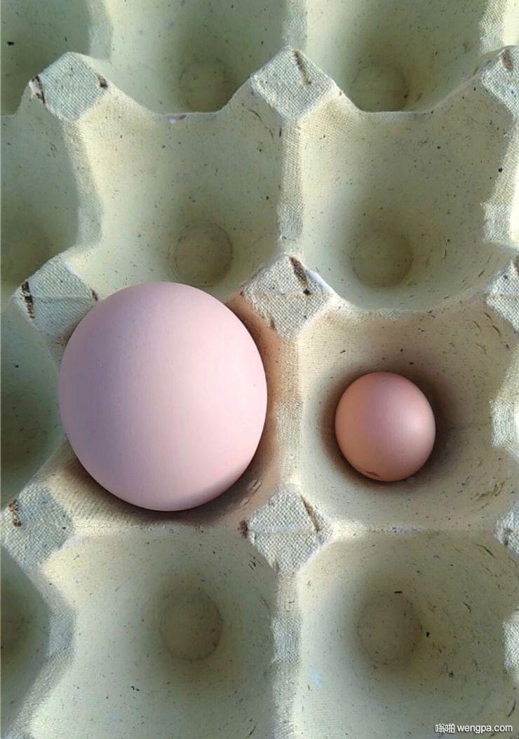 超市买的鸡蛋