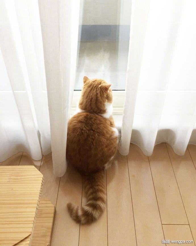 小橘猫:他们说我长大了就会胖,我有一点惆怅 