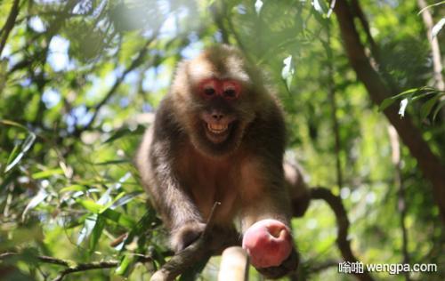 【搞笑段子】一大叔偷苹果被抓 要关一个月