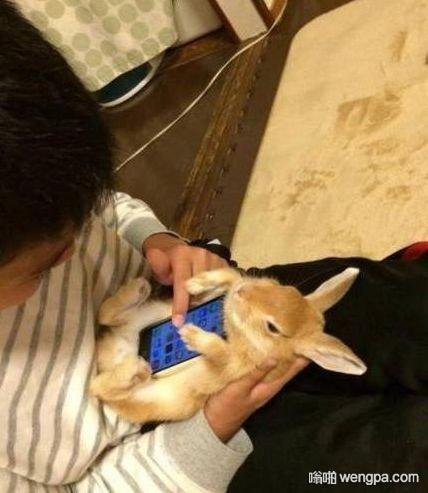 【兔子手机壳】手感好到爆的手机壳_搞笑图片 - 嗡啪网