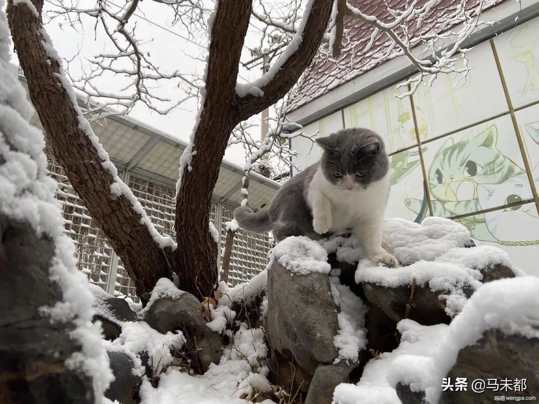 北京初雪 11月29日是北京平均初雪日