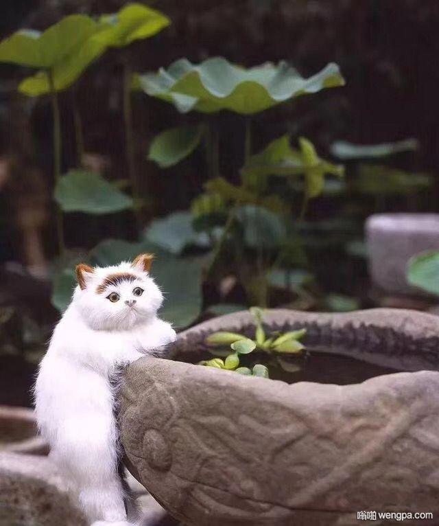 【可爱小猫】养了只小猫,觉得可爱吗 - 嗡啪网