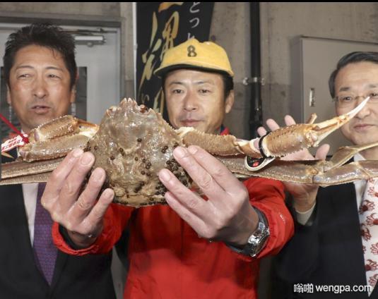 日本一只螃蟹被拍出了500万 看看什么螃蟹那么贵
