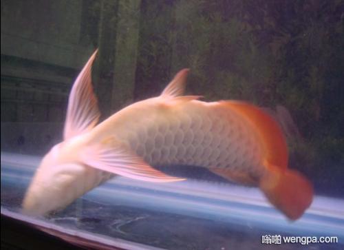 【笑话】哥们养了条鱼 有一天鱼死了