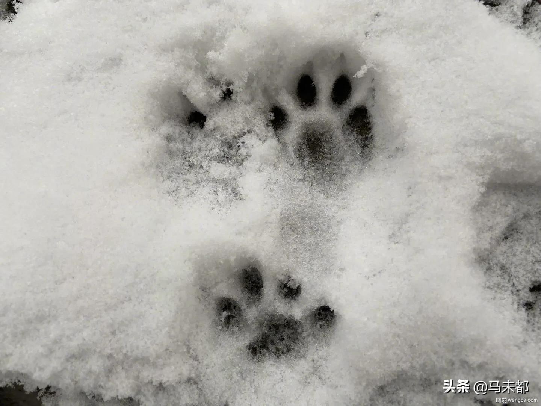 北京初雪 11月29日是北京平均初雪日 昨夜小雪如期而至 60年来头一次