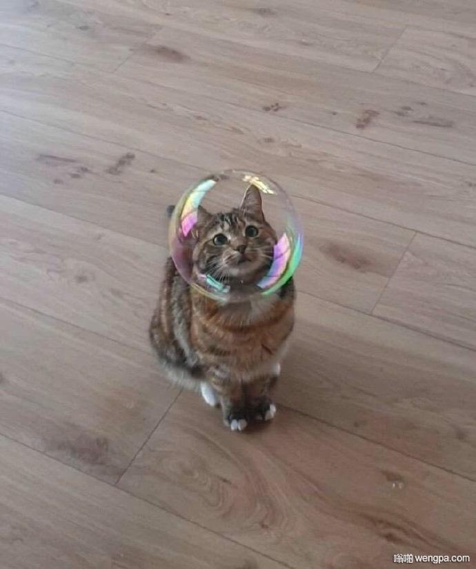 分享一只太空喵~头戴彩虹透明头盔