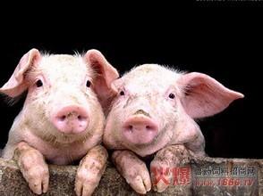 【搞笑段子】读书时!老师整天都说叫我回家喂猪算了