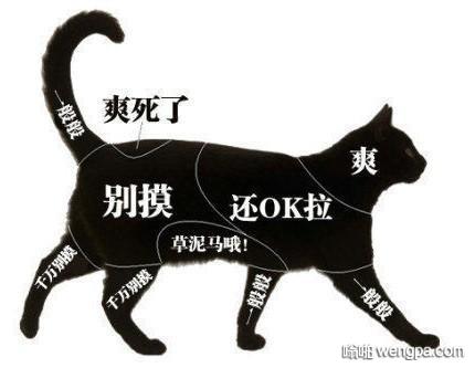 撸猫指南 撸猫图谱 看看哪些地方猫咪喜欢你挠它