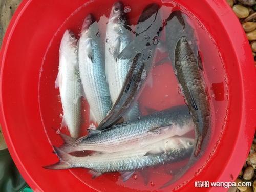 【买鱼笑话】活鱼20块钱 死鱼10块钱!