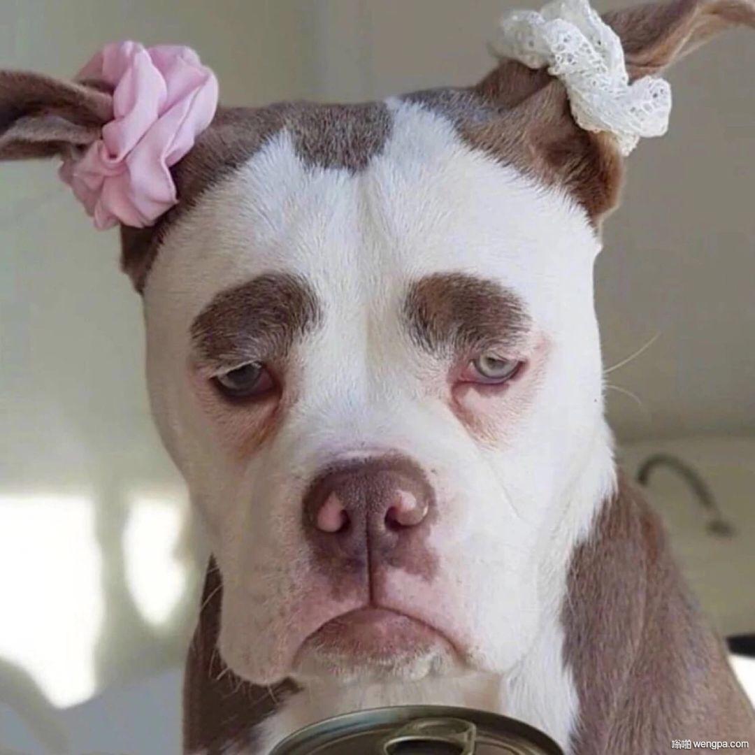 一组搞笑狗狗图片头像 可爱 逗比 表情包