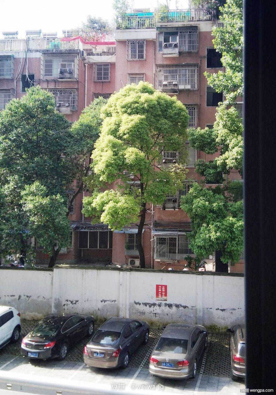 对面那棵树像马克思#生活中发现搞笑表情#