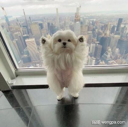 世界之巅 可爱狗狗图片
