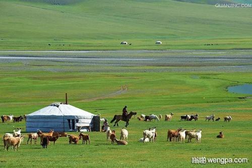 单位有个同事,蒙古人