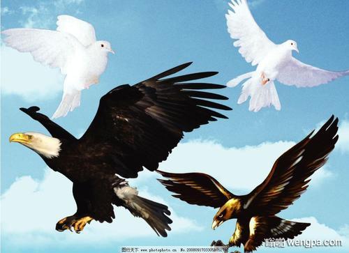 【搞笑段子】一只麻雀对鸽子说 你敢去打老鹰吗