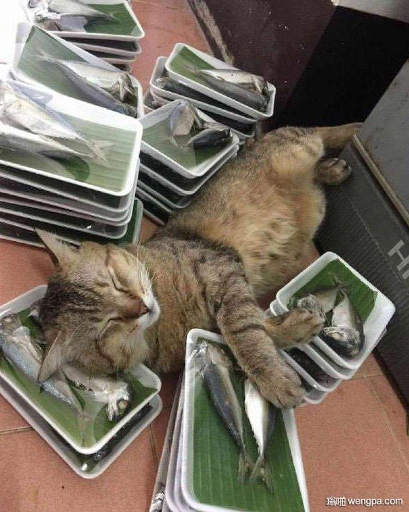 这猫咪有点颓废啊 醉生梦死的样子看起来令人羡慕