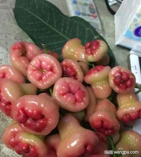 有人把这果子叫痔疮果 从此再也无法直视莲雾了